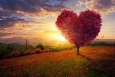 Dobít energii může každé znamení horoskopu stejným způsobem: objímáním stromů!